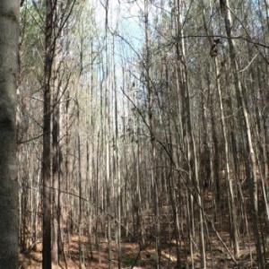 Hickory Flat,Mississippi 38633,Land,1010